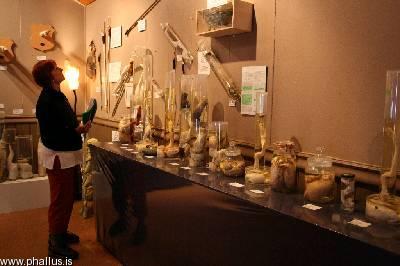 Visitante admira os exemplares do Museu Falológico irlândês. (Fonte: http://www.phallus.is)