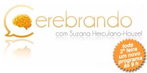 banner-Cerebrando